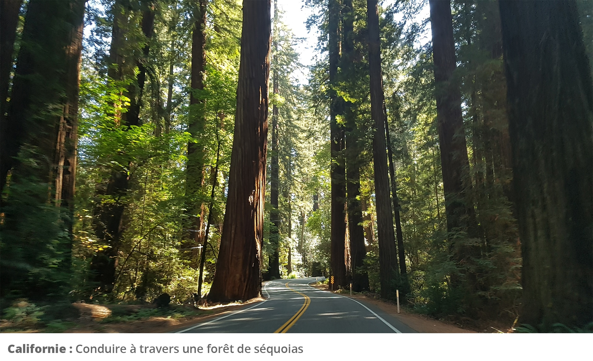 Picture of road in forest
